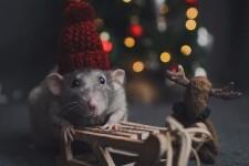 Сценарии на Новый год 2021: 4 идеи как встретить год Белой Металлической Крысы