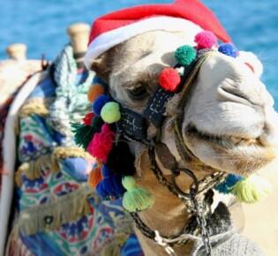 Новый год в Египте 2020: как встретить и чем заняться