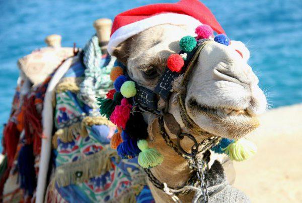 new-year-v-egipte