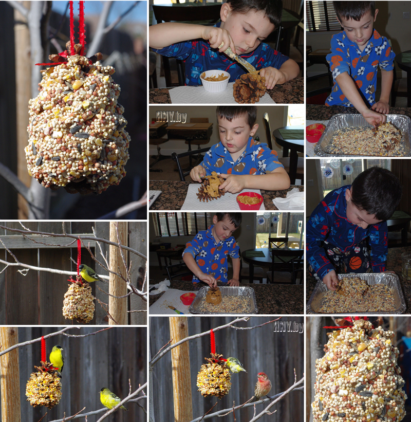 Поделки из шишек своими руками с детьми: делаем кормушку для птиц