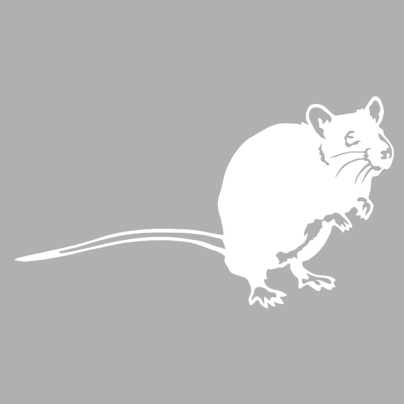 vytynanki-rat-03