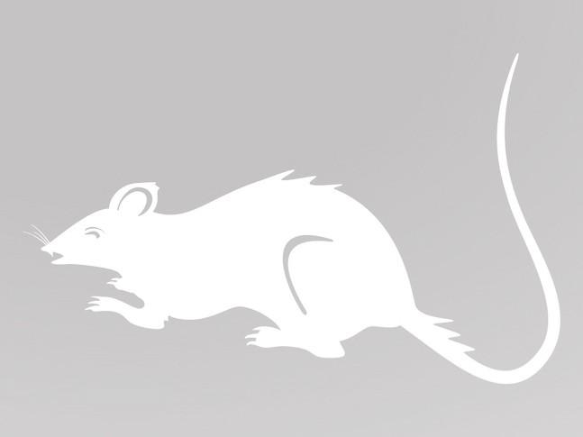 vytynanki-rat-04