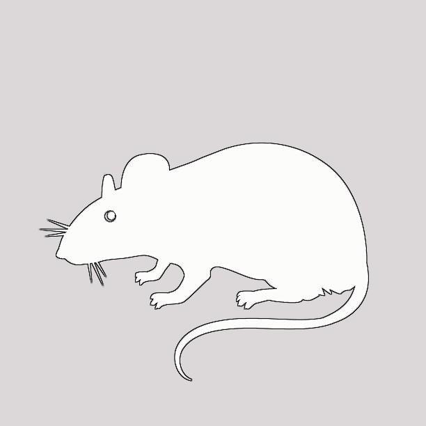 vytynanki-rat-05