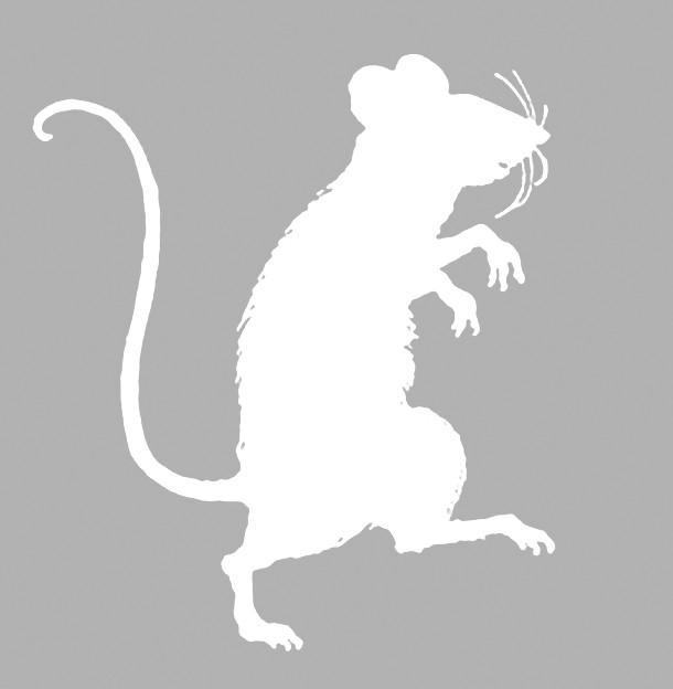 vytynanki-rat-10